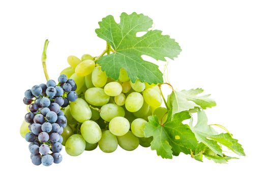 Ripe blue and green grapes with fresh leaves isolated on white background