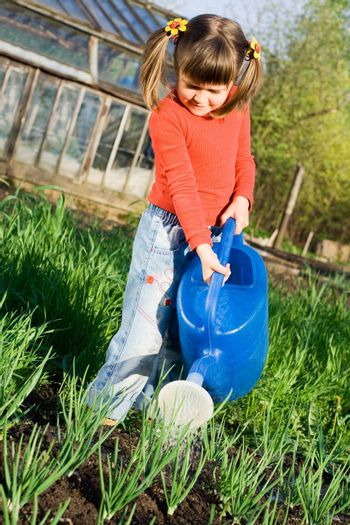 Little girl is watering onion from can on the vegetable garden in spring