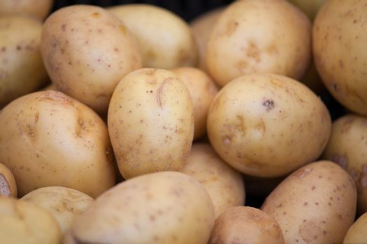 Group of young raw potatoes in brown jackets macro