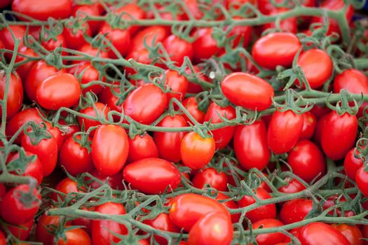 Bunches of fresh ripe red cherry tomatoes plum shape close-up