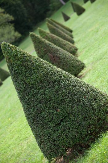 Group of evergreen pruned cone European box tree bushes or conifers on grass in cultivated park on the forest background