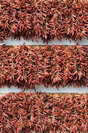 Rows of dried red hot chili pepper as a decor on the white wall background