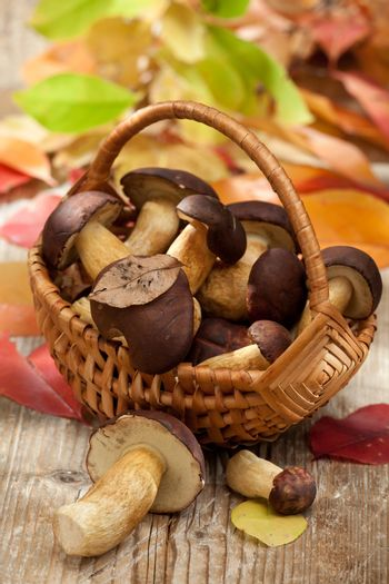 Group of woods edible mushrooms in woven basket on the wooden country table with autumn yellow abscissed leaves on the background