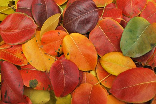Beautiful Fall foliage in a colorful arrangement.        A