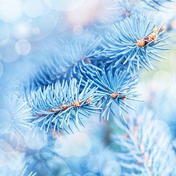 Frozen fir tree background