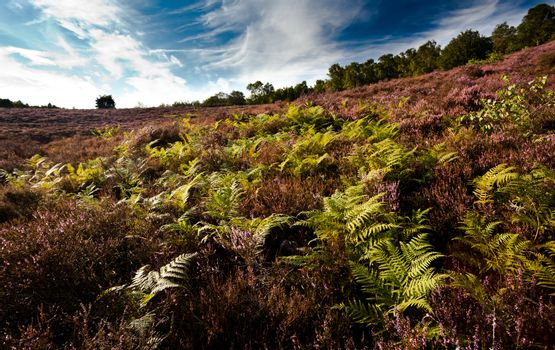 fern and heather