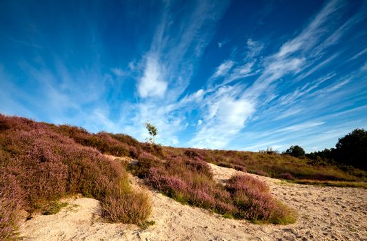 sandy dunes and pink heather
