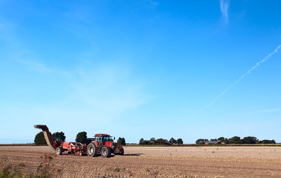 potato harvesting on summer field