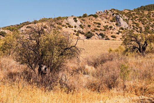 typical Spanish dry landscape