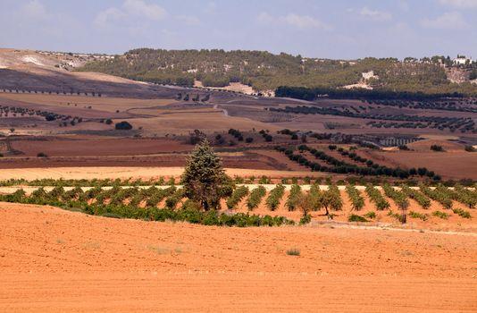 typical Spanish rural landscape
