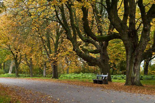 autumn season in Netherlands