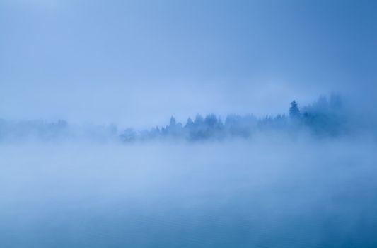 alpine coniferous forest in morning fog