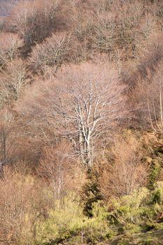 fall trees in Picos de Europa