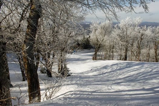 Calm winter ski slope with snow ladden tree tops