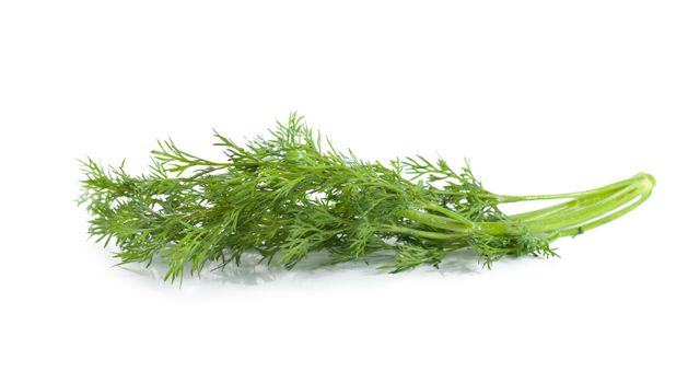 A branch of dill