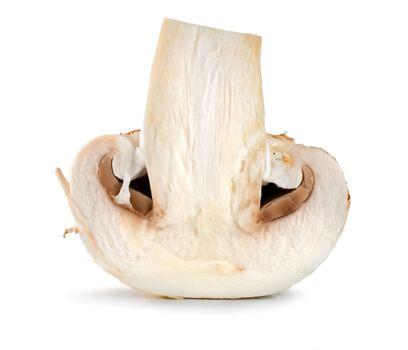 One champignon isolated