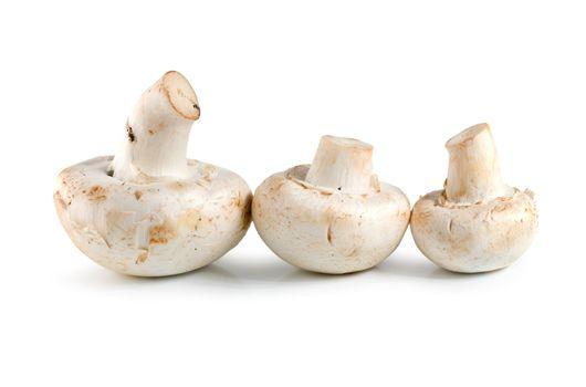 Three champignons