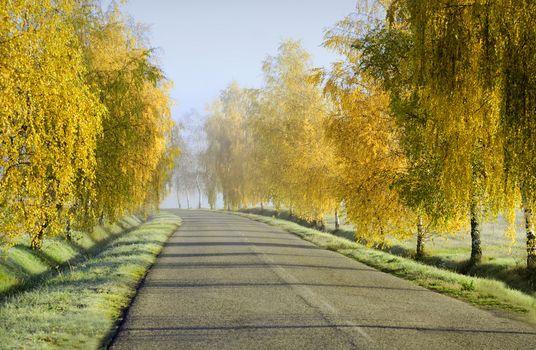 countryside road in fall season