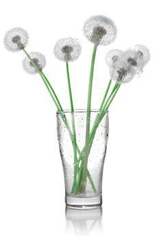 Dandelions in a glass
