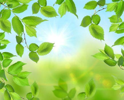 Beautiful soft green background