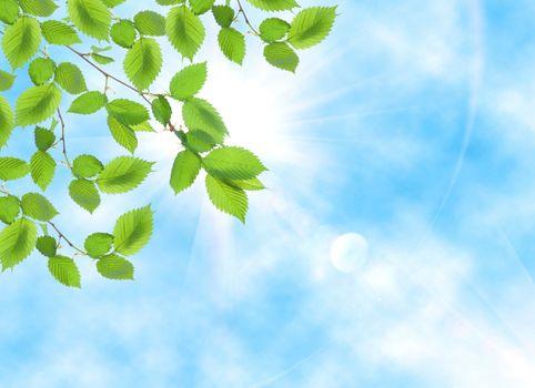 Green leaf opposite sun