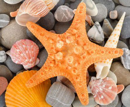 Sea shells and stone