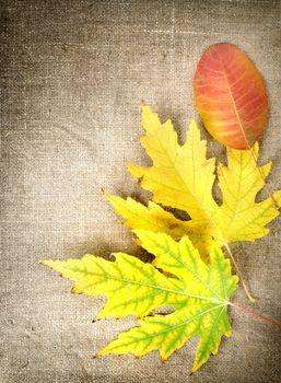 Autumn decoration on a canvas