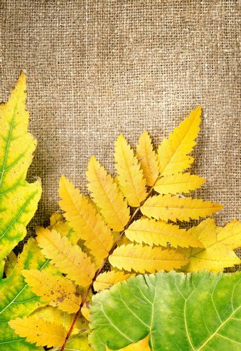 Autumn decoration with leaves on a brown canvas