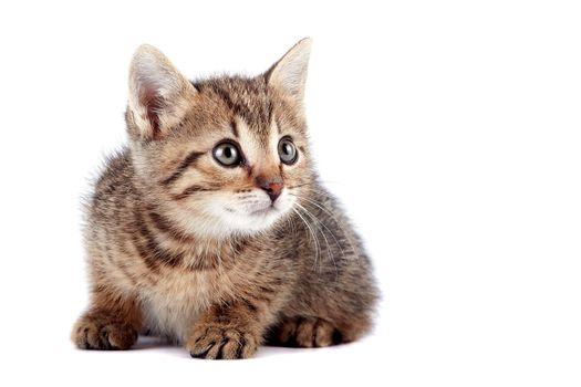 The striped kitten