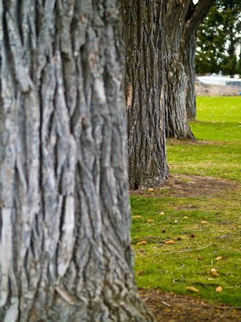 Trees Lined up on a Grassy Field