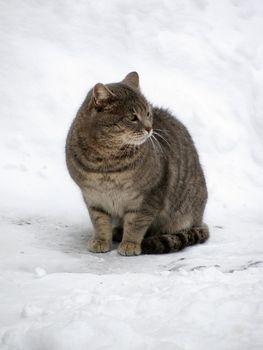 cat sitting on snow