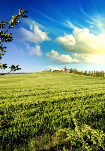Meadows of Tuscany in Spring Season, Italy