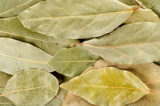 Arrangement of bay leaves