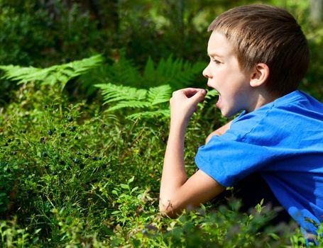 Kid picking berries