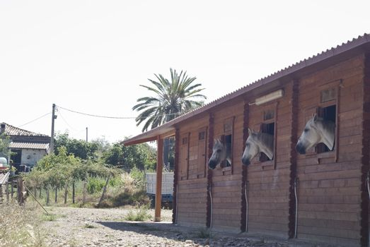 Horses in their stable. Nebrodi park, Sicily, Italy