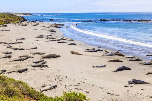 Sealions relax and sleep at the sandy beach