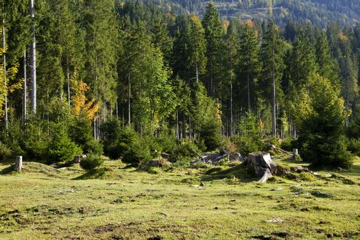 deforestation in Alps
