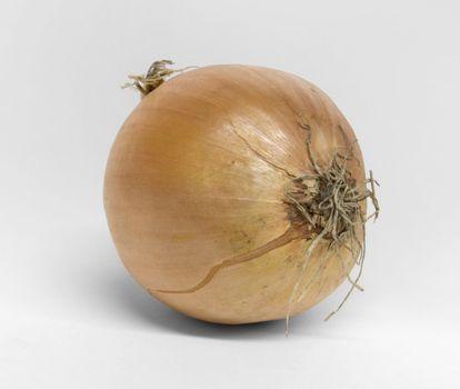 single onion on desk in light grey back