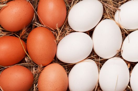 Fresh chicken eggs in the natural nest of hay
