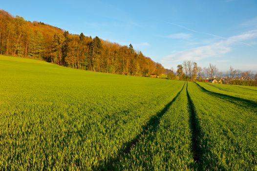 Rut on Grass