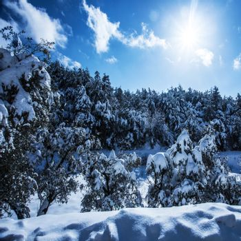 Snowy forest in mountains