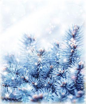 Snowy fir tree background