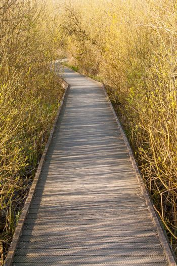 A wooden path in the marsh