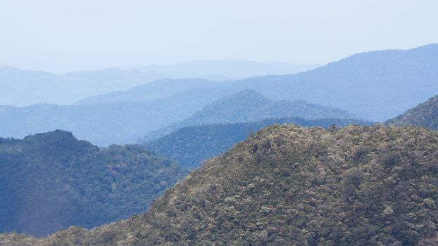 View of a the Vietnamese jungle