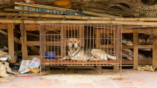 Dog in a cage in Vietnam