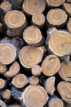 Round Logs Background