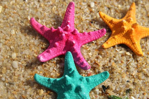 Funny vivid starfishes