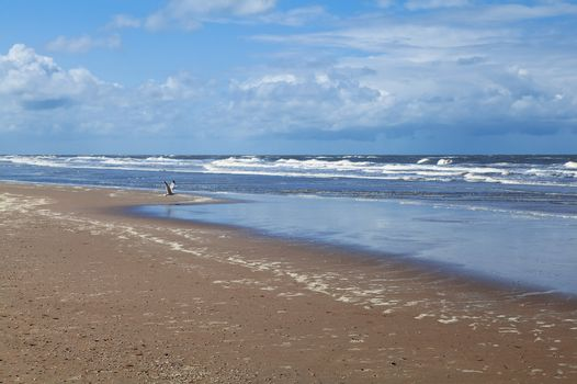 beach on North sea in Netherlands