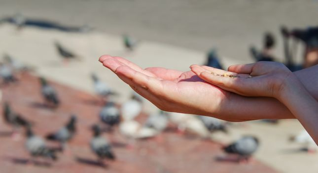 Two hands about to feed pigeons