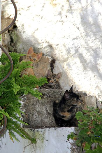 Cat and cute small kittens sitting on the steps